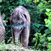 Baby Maliha Asian Elephant - Photo #293