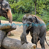 Baby Maliha and Mom - St. Louis Zoo.  Photo #229