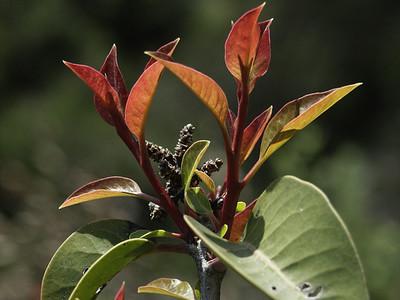 San Gabriel Mountain Plants