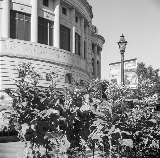 North Carolina Museum of Natural Sciences, W Jones St, Raleigh, North Carolina