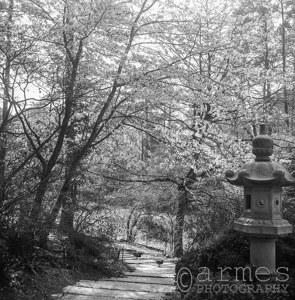 W.L. Culberson Asiatic Arboretum, Sarah P. Duke Gardens, Durham, North Carolina