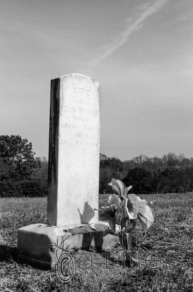 Dorothea Dix Hospital Cemetery, Raleigh, North Carolina