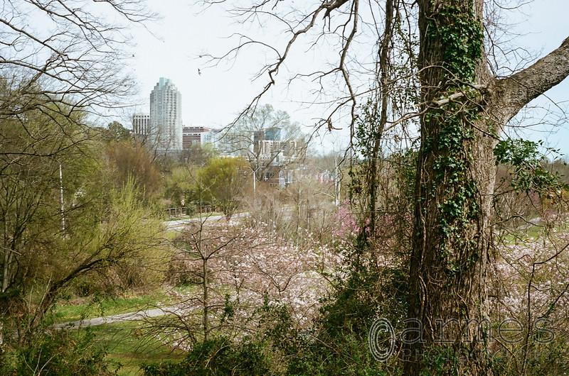 Raleigh skyline from Dorothea Dix Park, Raleigh, North Carolina