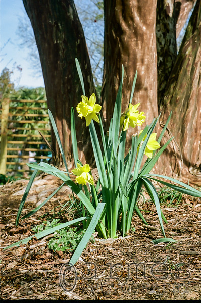 JC Raulston Arboretum, Raleigh, North Carolina