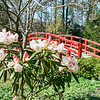 Arched Bridge, W.L. Culberson Asiatic Arboretum, Sarah P. Duke Gardens, Durham, North Carolina