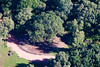 aerial photo of The Major Oak in Sherwood Forest, Nottinghamshire, the tree said to be Robin Hood's hideout.