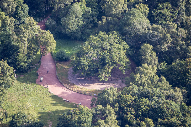 Aerial photo of The Major Oak in Sherwood Forest.