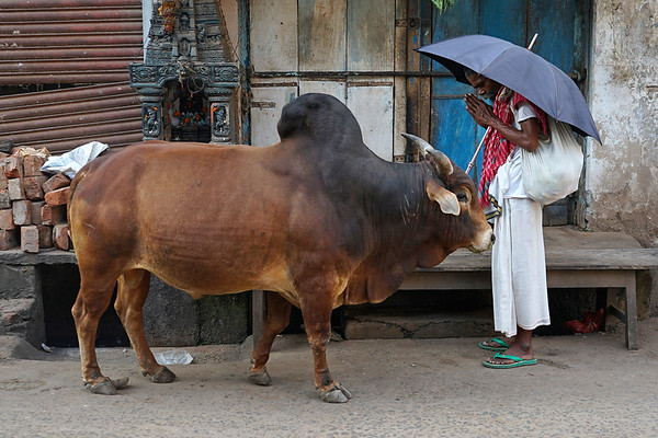 Nov 2016 - Puri (Orissa) 5
