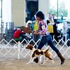 Bob West's 9 to 12 month puppy bitch 1st place RWB