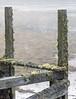 Dew-laden spider web suspended on pier remnants
