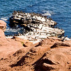 Cape Tyron, PEI, cormorants