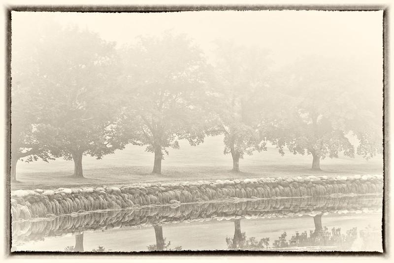 'Mystical Trees'