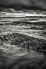 Sea Creatures in Monochrome - Nova Scotia - Andrew Ehrlich - October 2012