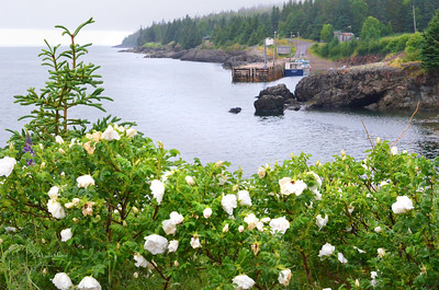 White Roses, private garden, Scots Bay