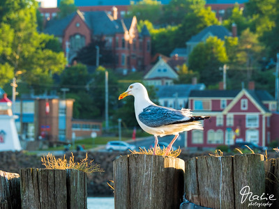 sea-gull overlooking the harbor of digy
