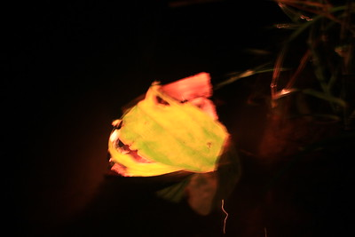 floating, flaming & shining leaf-made candle boat
