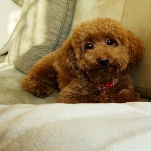 Ginger the pretty girl