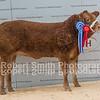Baby Beef Reserve Champion