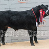 Overall Reserve Champion (Champion Steer)