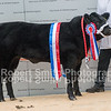 Baby Beef Champion