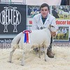 Champion Single Lamb R Lancaster from Clitheroe