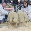 Champion untrimmed lambs R Hall & Son Dalston Carlisle