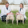 Overall Supreme Champion R Garth from Benthamwith a pair of trimmed wethers