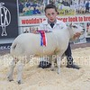 Champion Young Handler H Heath from Ashbourne