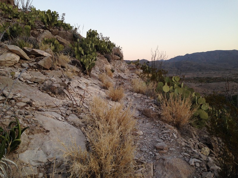 A typical trail in the lower elevation part of the park. Prickly pear, ocotillo and mesquite dominate. And the only noise at all is crickets and the occasional bird.