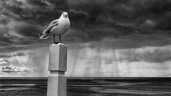 """""""Gallant Gull."""""""