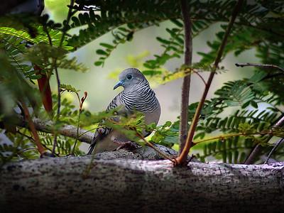 Peaceful Dove, 2006.