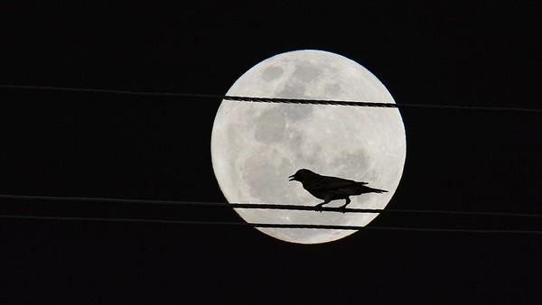 """Bird on the Wire."""