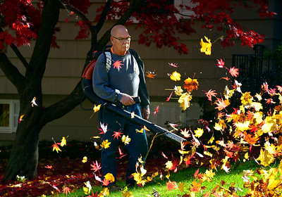11/7/2018 Mike Orazzi | Staff Armand Couture clears leaves from his lawn off Woodland Street in Bristol on Wednesday afternoon.