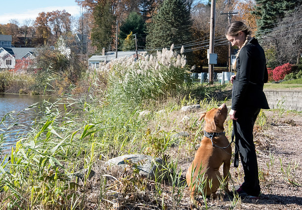 11/07/18 Wesley Bunnell | Staff Sarah Smith walks her dog Mason on a sunny Wednesday afternoon at Paper Goods Pond in Berlin.