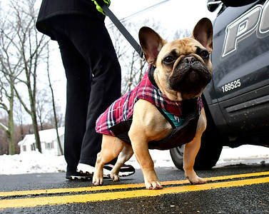 11/16/2018 Mike Orazzi | Staff Melody Grant while out with her dog Remington on Willis Street in Bristol Friday morning.