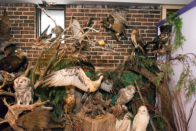11/28/18  Wesley Bunnell | Staff   Rooms are in the middle of being redesigned at the New Britain Youth Museum at Hungerford Park under the direction of new Executive Director Tom Pascocello featuring STEM themes combined with a natural background. Different bird species are shown in an area which will eventually feature a live owl.