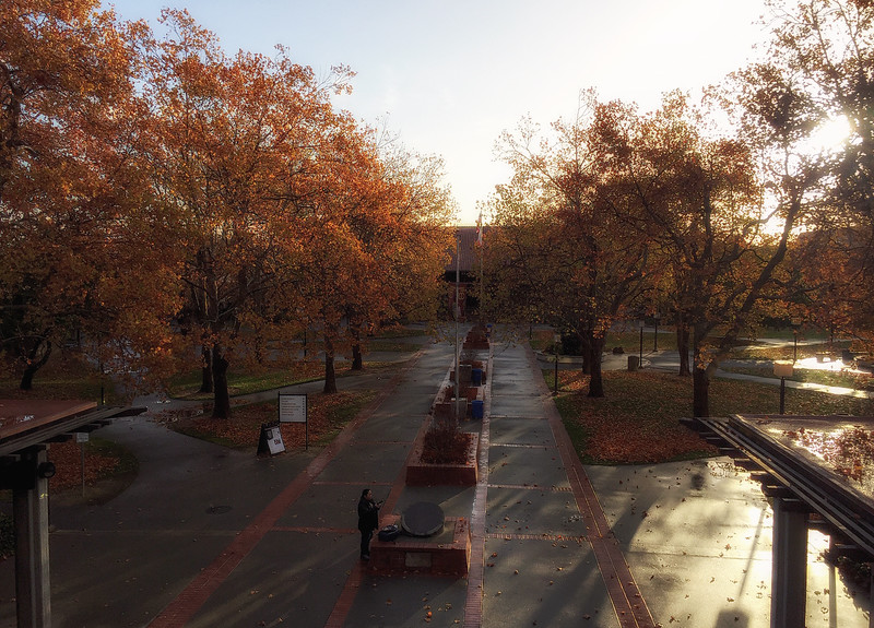 campus in the late fall