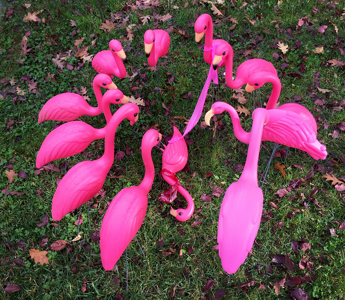 flamingo funeral