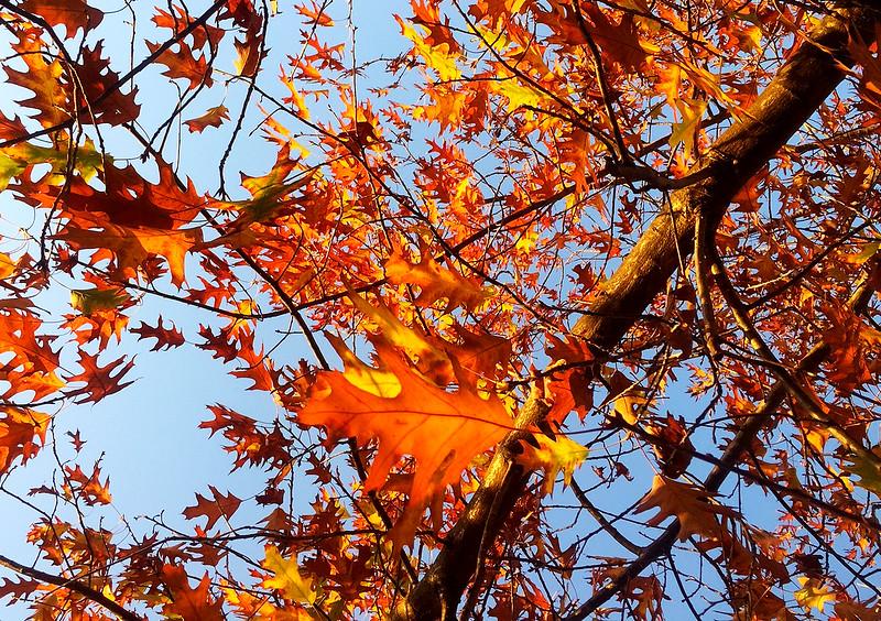 fall at SCC