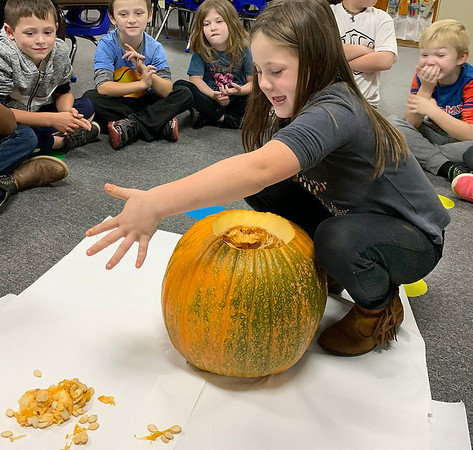 MINDI HARVISON | Submitted photo<br /> Emerson First Grade Student Kylee Maple participates in the classroom pumpkin investigation. Students feel, smell and taste the inside of the pumpkin along with counting the seeds amoung other things.