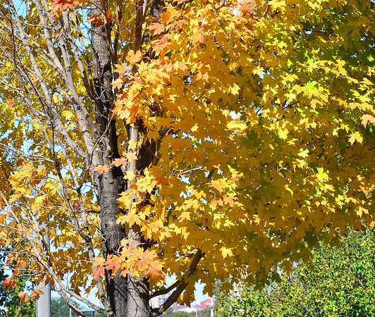 KEVIN HARVISON | Staff photo<br /> Some leaves around McAlester are starting to turn before falling from the trees.