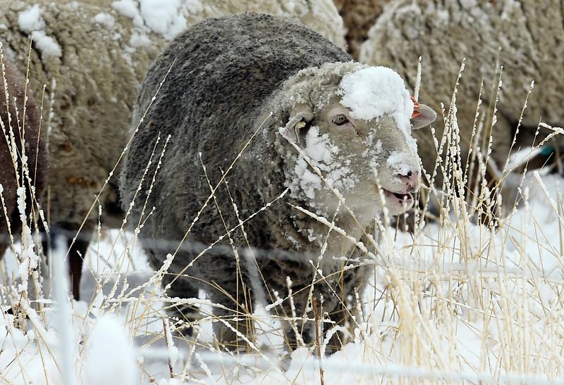 County Snow