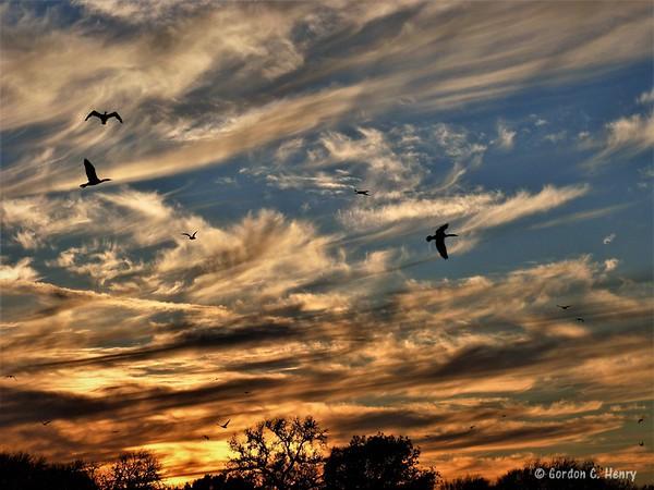 cormorants and sunset