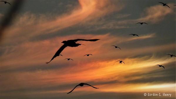 cormorants and sundog