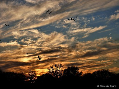 cormorants and sunset
