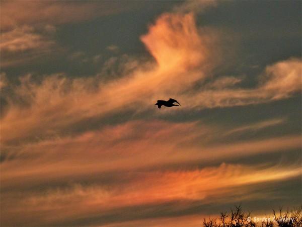 cormorant and sundog