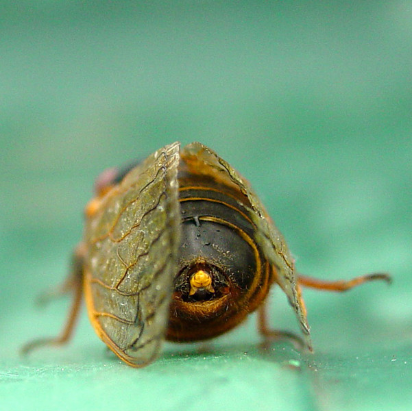 Cicada By The Tail