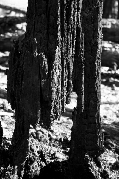 Burnt Stump
