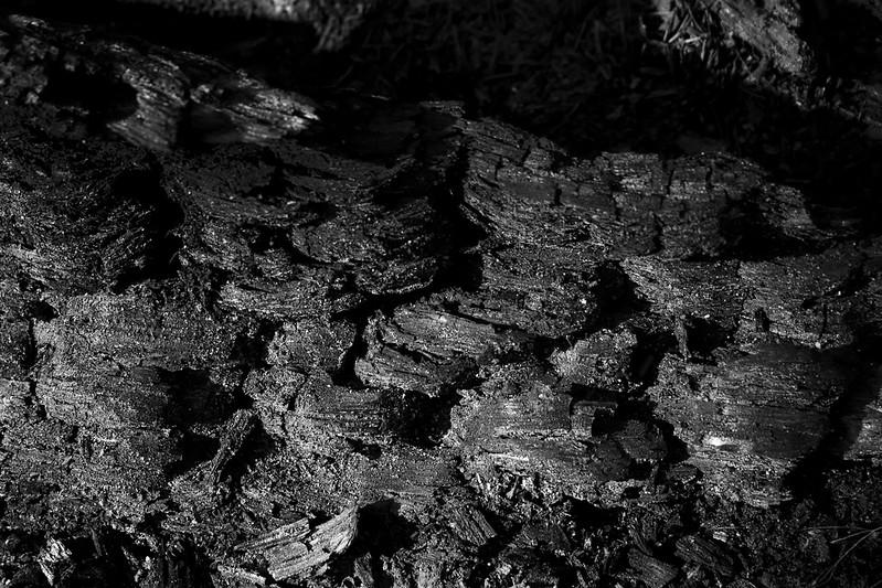 Dead Log Cinders