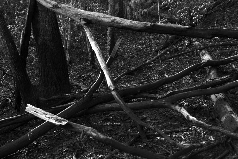 Fallen Branches Burned Bare